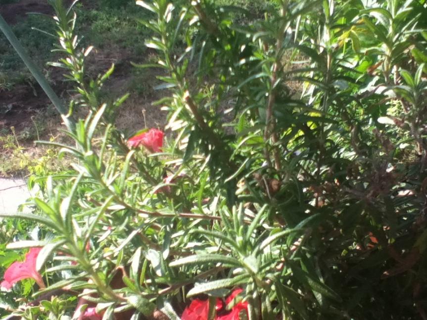 Creating a Beautiful TeaGarden