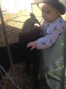 petting goats