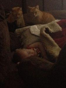 baby and kitties