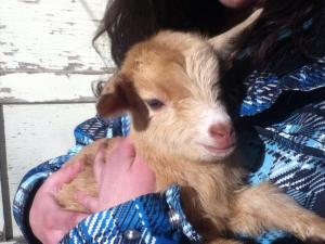 new goat