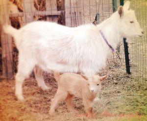 katrina and baby