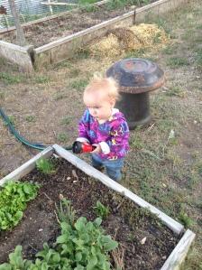 The littlest farmgirl helping water.