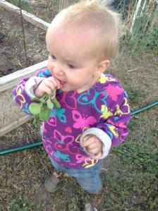 Maryjane's first radish.