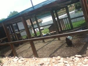 The dream chicken enclosure!