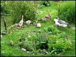 Another idea garden.