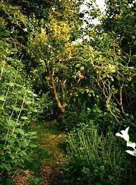 Food forest idea garden.