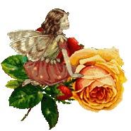 fairy38