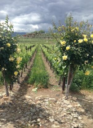 winery 6