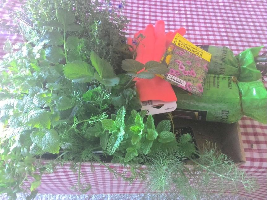 Farmgirl Gardening Series-Week 3 (Herbs andRoses)