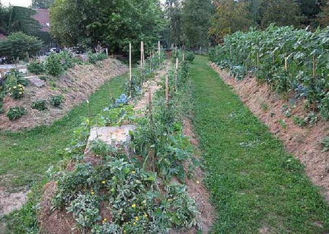 Hugelkultur Gardening
