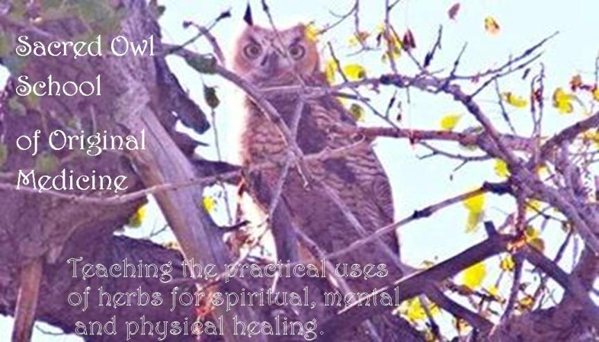 Become a Plant Medicine HealerToday