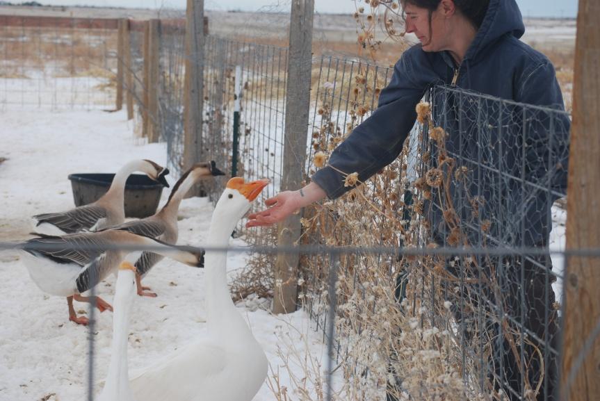 Field Trip to an Animal Sanctuary (and savingchicks)