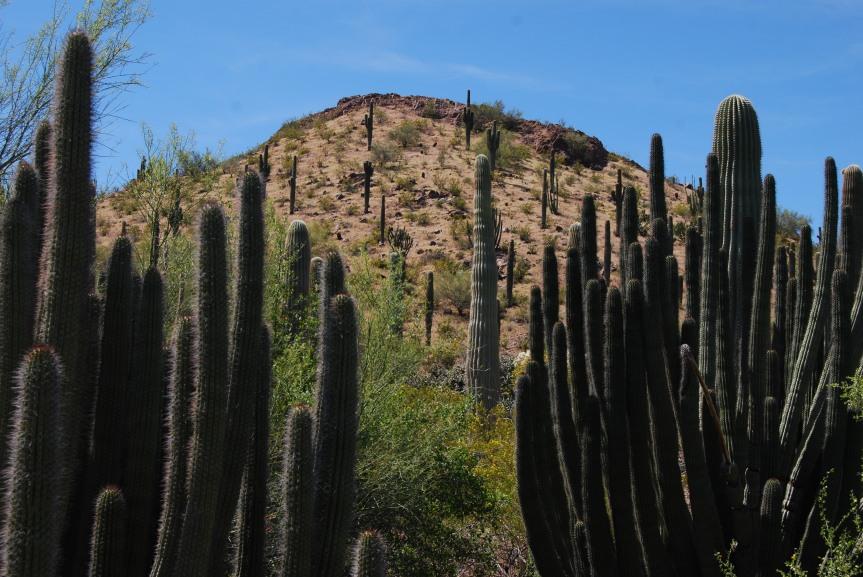 A Visit to the Desert Botanical Garden inArizona